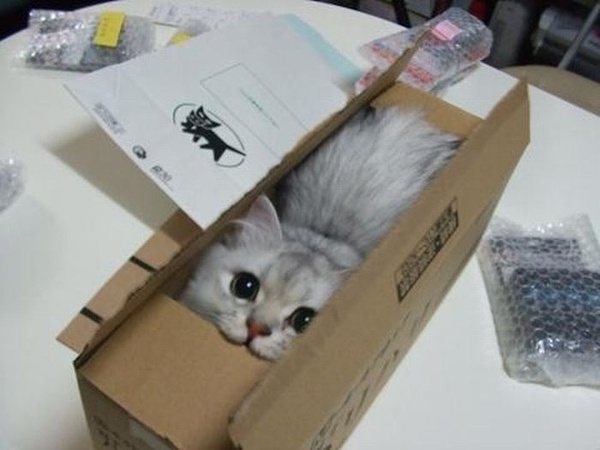 Chat dans un carton